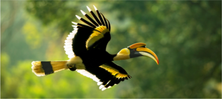 The Great Indian Hornbill habitat at the Tata Coffee Plantation was featured in the 'Our Planet' TV series in an episode broadcasted in 2019
